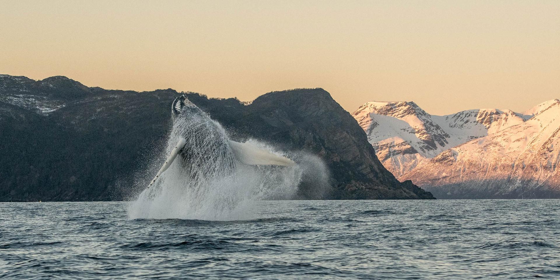 Mythique Norvège