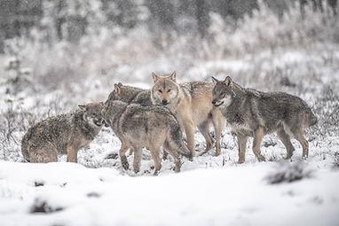 reveil8-nature-finlande-territoiresdunor
