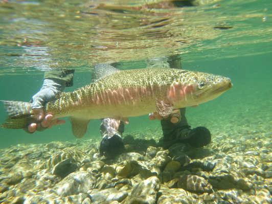 Tauranga Taupo River.jpg