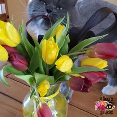 Bouquet de tulipes en vase