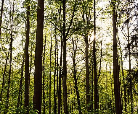 bigstock-Bright-Green-Forest-Natural-Wa-