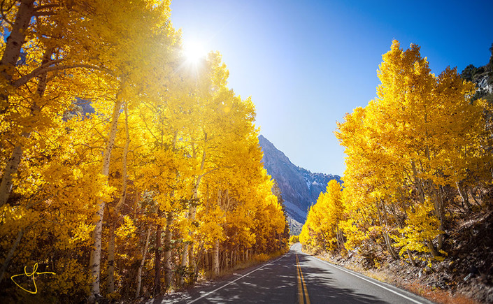 Golden Road of Aspens