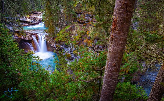 Treeside Falls