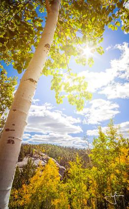 Sunshine On Autumn