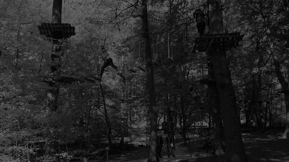 Hintergrund_Kletterwald.jpg