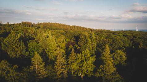 Entspannen und Erholen inmitten der herrlichen Natur des Binger-Waldes.