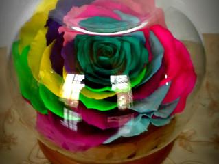 ¿Qué sucede cuando regalas una rosa eterna?