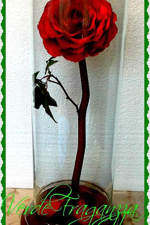 Rosa encantada gigante