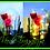 Thumbnail: Lampeggio