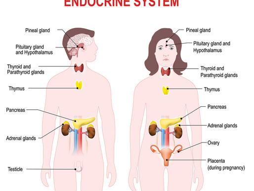 Hormones & helpful tips to balance them!