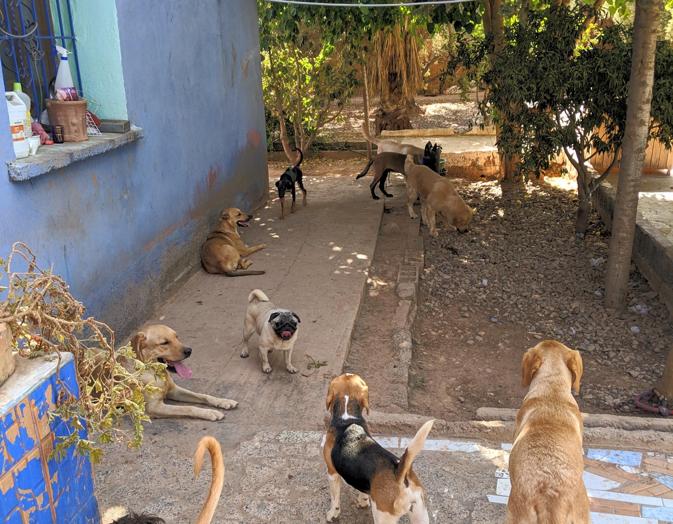 Pension pour chiens Dog Universe Marrakech