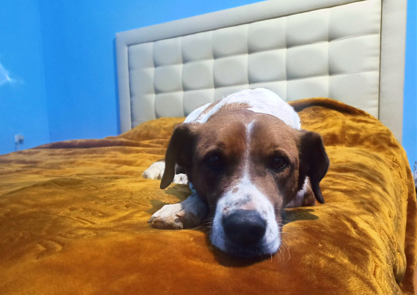 PENSION DOG UNIVERSE MARRAKECH