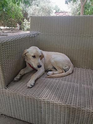 Dressage chien Dog Universe Marrakech.jp