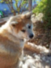 Toilettage Dog Universe Marrakech