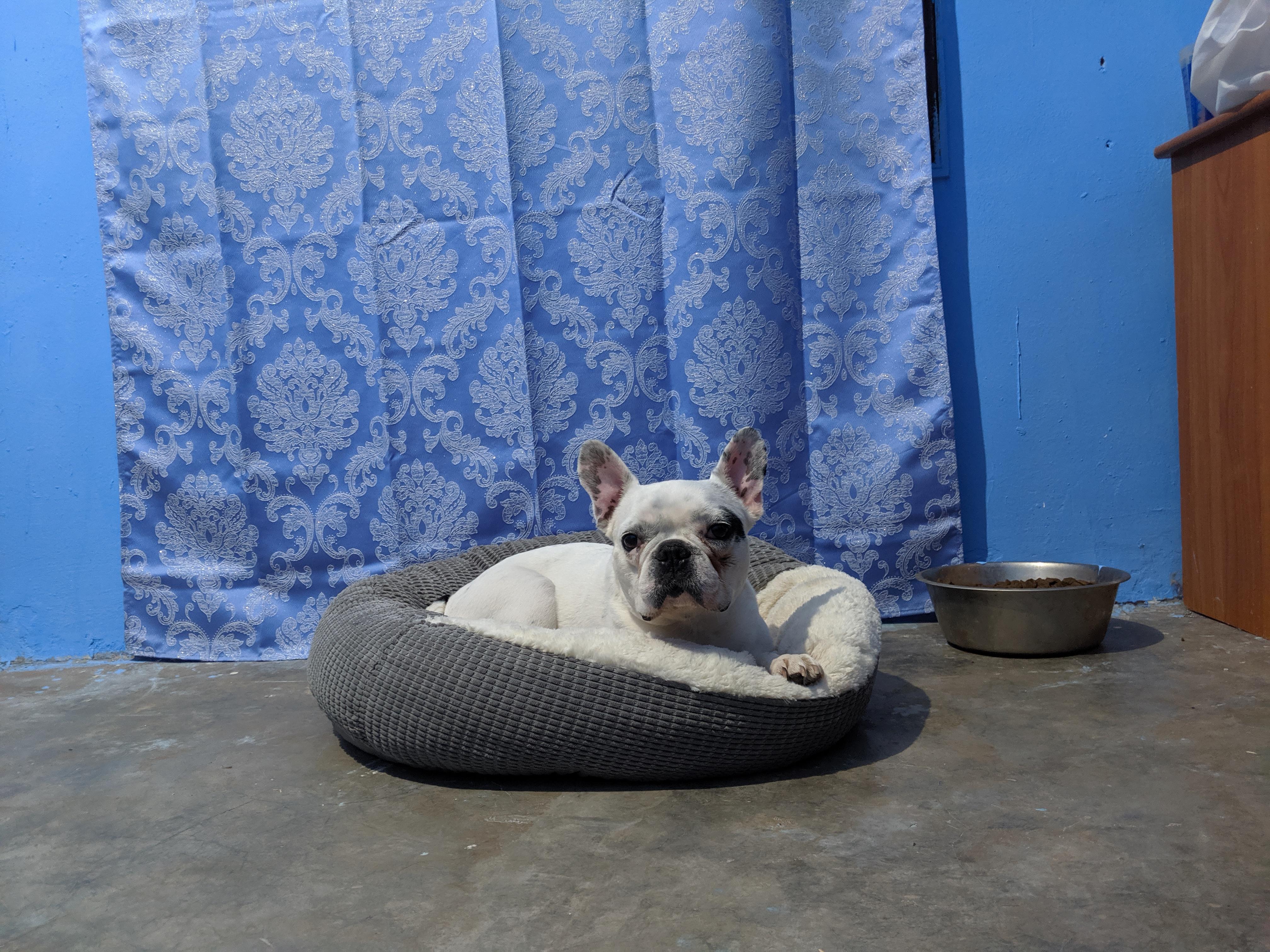 Pension pour chiens Dog Universe Marrakechnsion pour chiens Dog Universe Marrakech