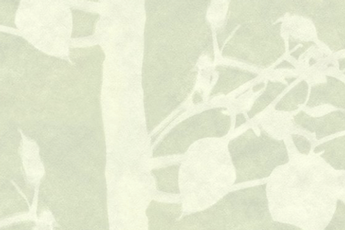 Forest | moss