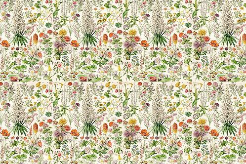 Botanical | elizabeth's garden