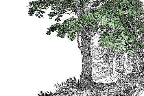 Vintage   tree of life