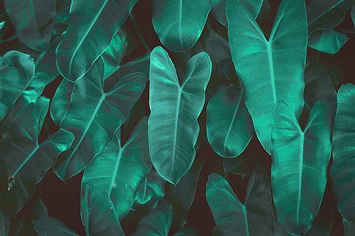 Leaves   anaconda