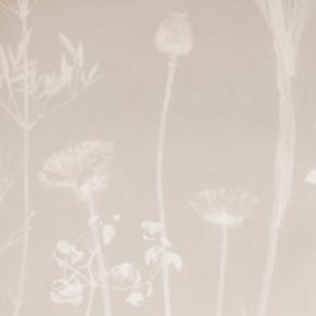 Flora | thistle