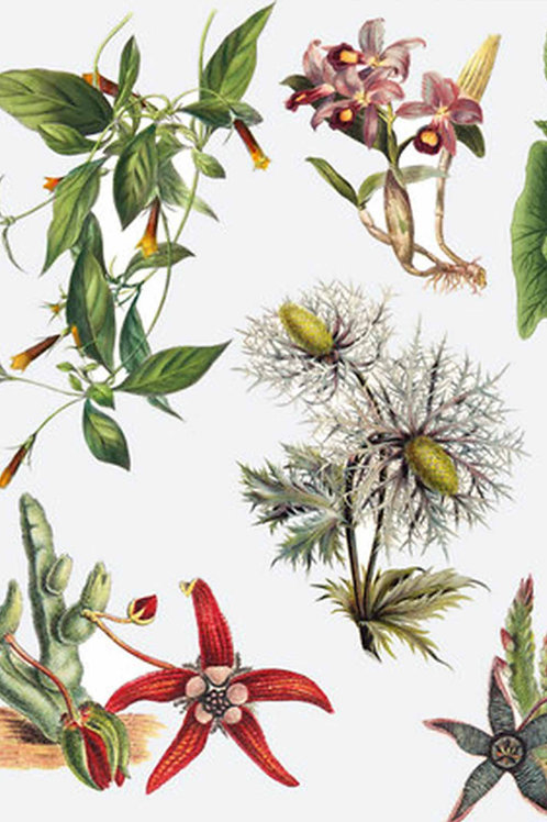Botanical | maggie came for tea