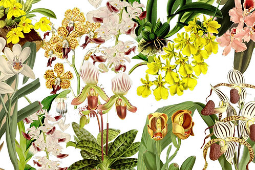 Botanical | occasional visits