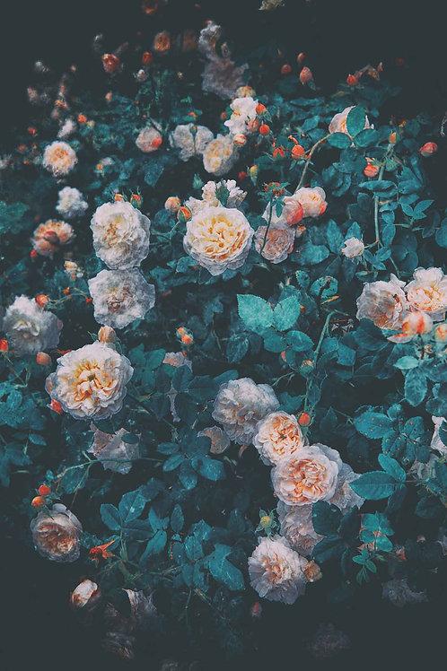 Floral | company gardens