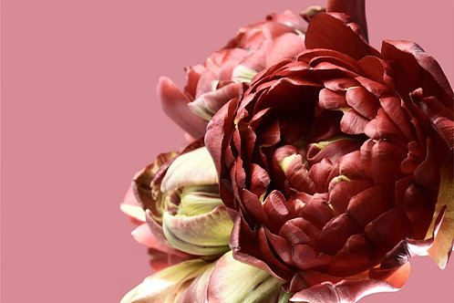 Floral | gracie