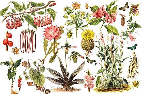 Botanical | bugs