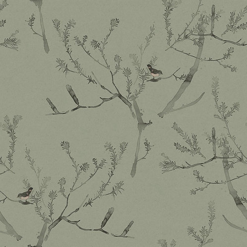 Heath Banksia | tea green