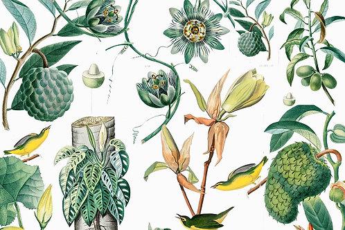 Botanical | formosa