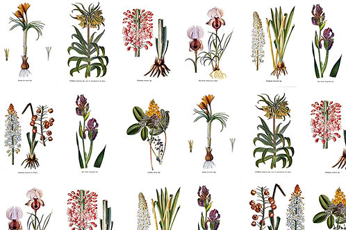 Botanical | botanist's wall