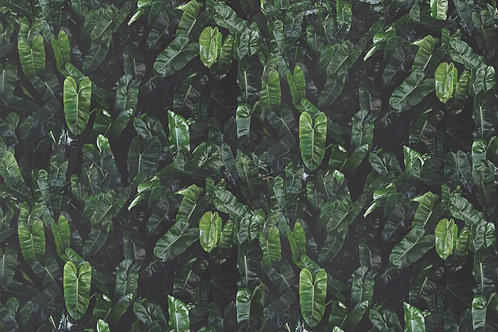 Leaves | search party