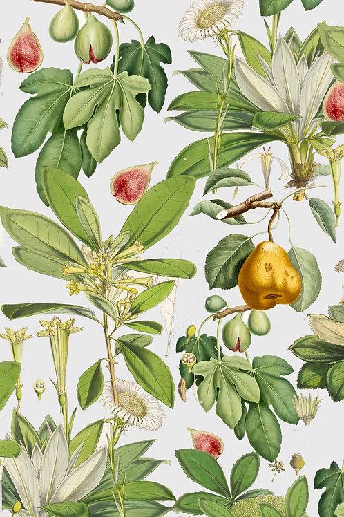 Botanical | adam's fault
