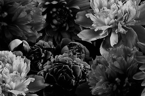 Floral   living color