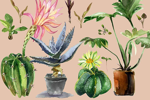 Botanical   house plants