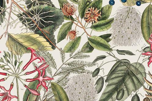 Botanical   lello