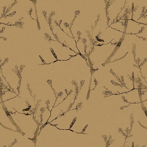 Heath Banksia | tawny