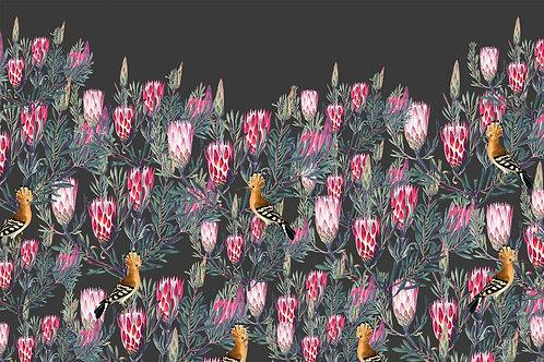 Botanical | protea hedge