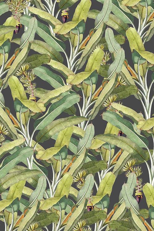 Leaves | banana leaves take 10
