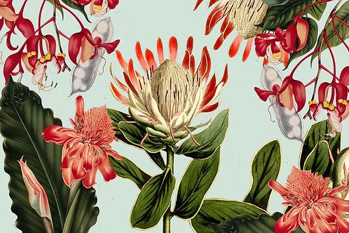 Botanical | protea and co.