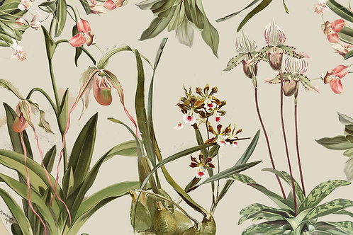 Botanical | orchid kingdom