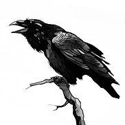 bw raven bookmark icon wix.jpg