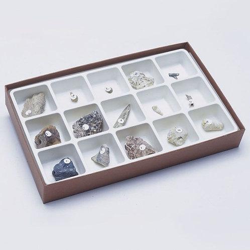 Colección de Tipos de Fosilización
