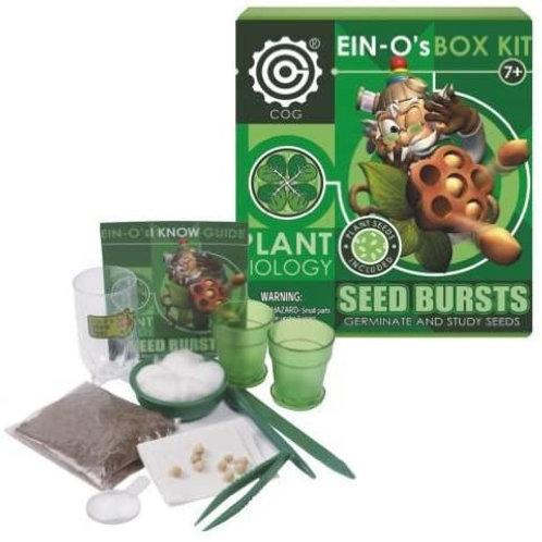 SEED BURST- EIN-O´s BOX kit