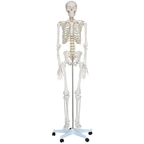 Esqueleto Humano c/soporte 1,8m