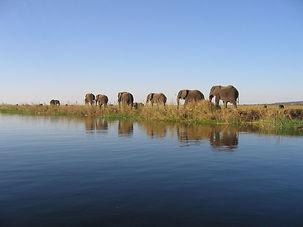Tigres du Zambèze