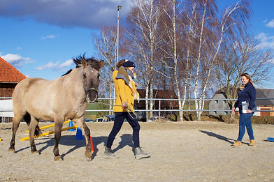 Pferdegestütztes Coaching, Coaching mit Pferd, Horse Assisted Coaching