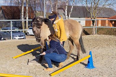 Gesamtausbildung Dipl. Trainer der tiergestützten Intervention