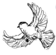 flying%20bird_edited.jpg